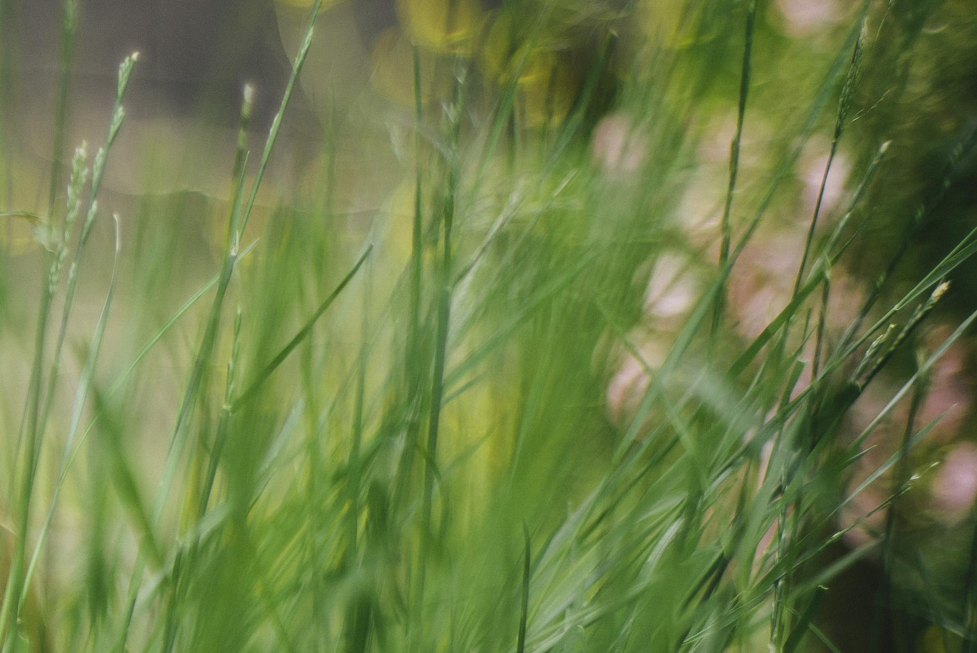 Ver ffentlichungen steurer gartengestaltung for Gartengestaltung john